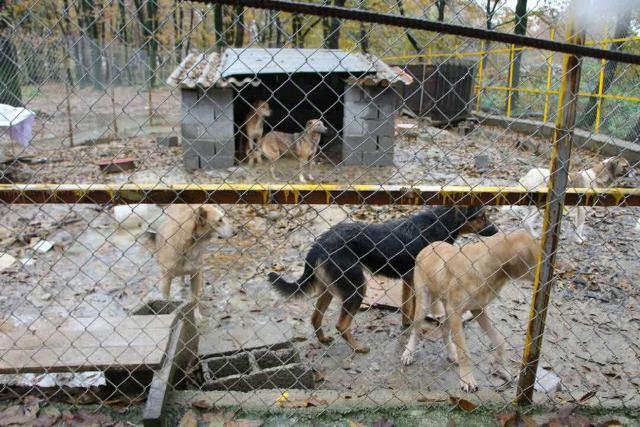 گزارش تصویری از جمع آوری روزانه سگ های بلاصاحب توسط شرکتهای زیر مجموعه حوزه خدمات شهری جمع آوری روزانه سگ های بلاصاحب توسط شرکتهای زیر مجموعه حوزه خدمات شهری در حال انجام می باشد.
